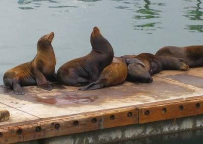 Oceanside Seals