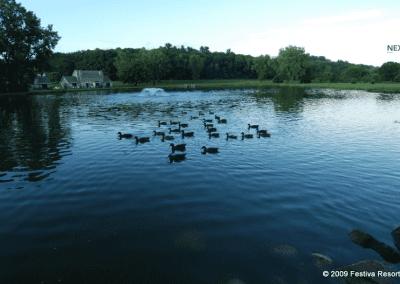 Tamarack Ducks