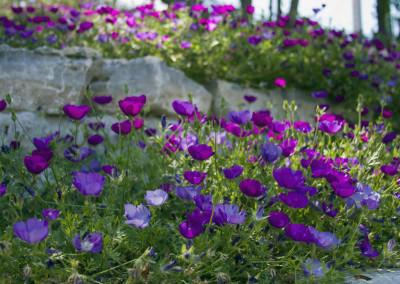 Wildflowers on the Riverwalk